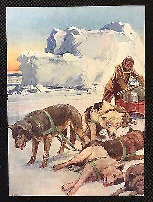 Original 1934 Colour Dog Print / Bookplate - ESKIMO DOGS, Sled Dogs, Husky