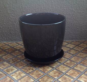 Black Plant Pot Darling Point Eastern Suburbs Preview