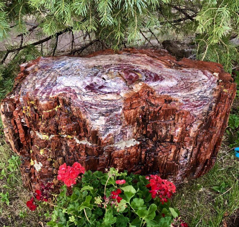 REILLY'S ROCKS: Massive Gorgeous Arizona Rainbow Petrified Wood Stump, 2500+Lbs