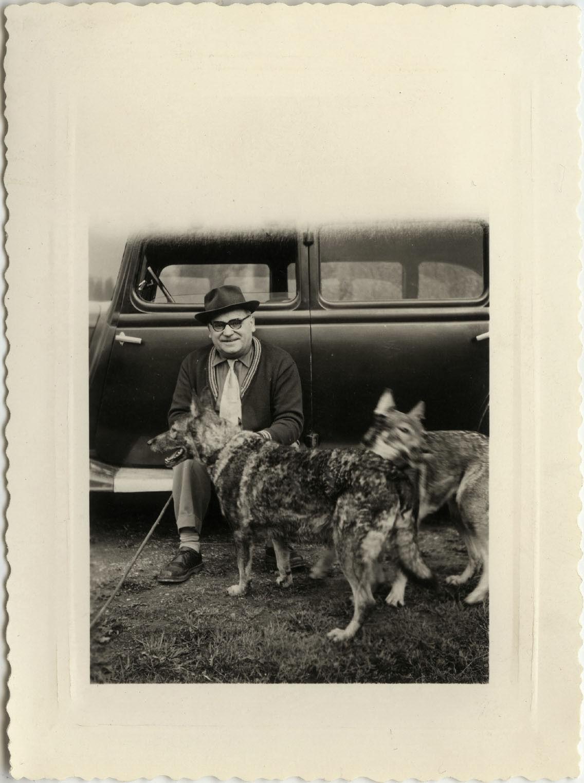 Photo ancienne - vintage snapshot - animal chien berger allemand voiture - dog 6