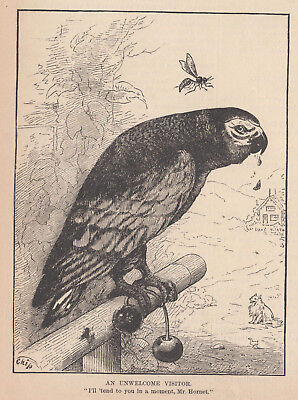 PARROT BIRD SITTING ON PERCH with NEARBY HORNET ANTIQUE ART PRINT 1882