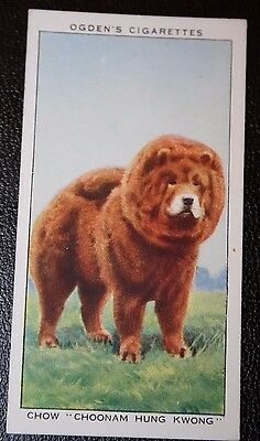 CHOW  CRUFTS CHAMPION     Original Vintage Coloured Card  VGC