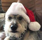 Santa Dexter