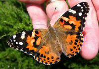 BUTTERFLY  HATCHING KITS FOR SALE