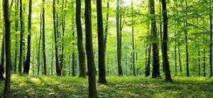 Wanted woodlot or woodland
