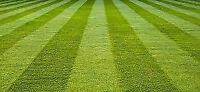 FREE ESTIMATES ON YARD CLEANING AND MAKEOVERS!! 324-3659!