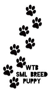 WTB small breed puppy Newnham Launceston Area Preview