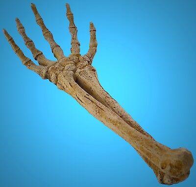 TOP Aquarium Deko 26,5 cm ✝ HAND ✝ Skelett Skull Gerippe Dekoration Zubehör