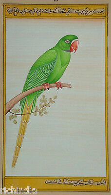 Bird Watching painting forest United KINGDOM Water Color wild life PARROT INDIA