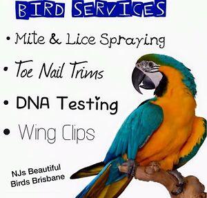 ☆☆BIRD SERVICES!!☆☆ Edens Landing Logan Area Preview