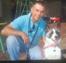house call dog trainer. Rick The Dog Man St Clair Penrith Area Preview