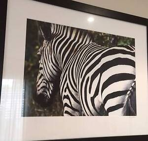 Zebra Framed Picture Edgewater Joondalup Area Preview