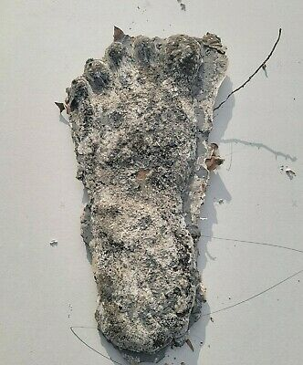 SASQUATCH/BIGFOOT~ recast of a 2010 foot print found in Uwharrie National Forest