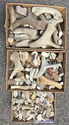 Assorted Elk & Deer Antlers 1 Lb Bag Premium Crafting Cut Pieces! Sheds Horn -