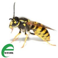 WASPS-COCKROACHES-ANTS-BEDBUGS-MICE CONTROL 416-834-3789