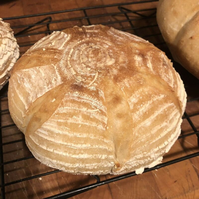 San Francisco SOURDOUGH STARTER 100+ yr old yeast sf tangy sour very active S.F.