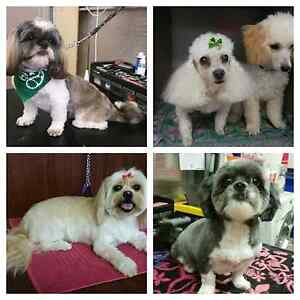 Affordable  Dog Grooming Ipswich Ipswich City Preview