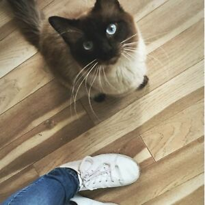2 male cats need good quiet home