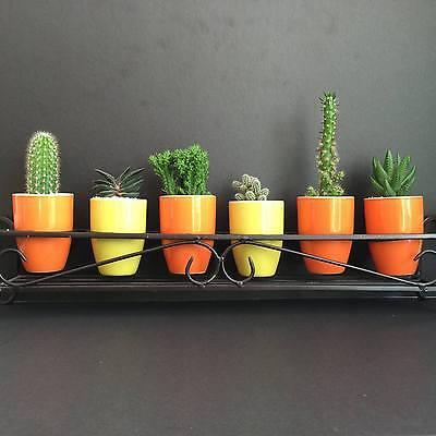 MLD Succulents