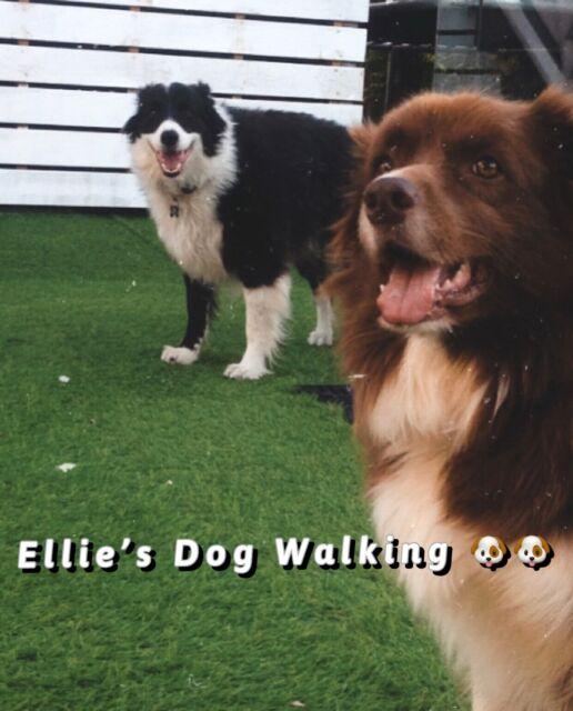 Chermside Dog Walking Other Pet Services Gumtree Australia Brisbane North East Chermside 1246420345