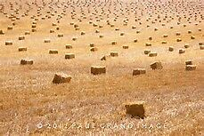Straw Square Bales for Sale