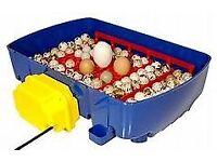 for sale a borotto incubator