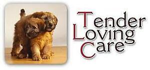 TLC PET CARE-Dog Boarder/Walker & Pet/House Sitter Avail