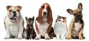 Pet Sitting & House Sitting Orillia and Muskoka Area
