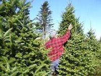 Live In Farmer - Christmas Trees/Firewood