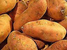 Sweet potatoes livestock feed