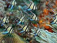 Marine fish and accessories products and more