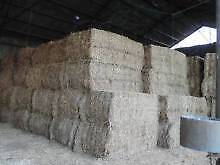 HAY FOR SALE LOCATED @ MOSS VALE HORSE QUALITY START $13 + Picton Wollondilly Area Preview
