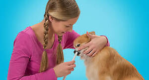 Dental Care for your Dog/Cat Scaling,Polishing and Extraction
