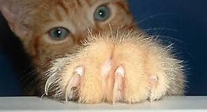 I'LL TRIM YOUR CATS NAILS FOR $10 IN YOUR OWN HOME.