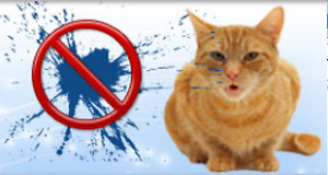 CAT SPRAYING NO MORE - TEACH YOUR CAT TO USE THE LITTER