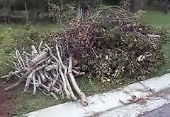 Tree ,Leaf, Brush , Junk Removal Services