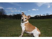 Professional Dog Walking Service In Edinburgh by Dugs n Mogs