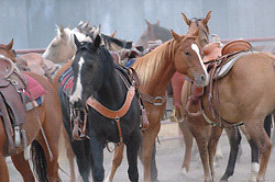 Looking for free horse/ horses for trail riding
