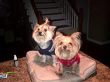 PET SITTING $25 PER DAY, DOG DAY CARE $15 to $20 PER DAY London Ontario image 3
