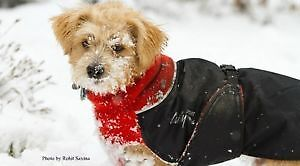 "Chilly Dog 10""inch winter coat 4 Small Dog:))"