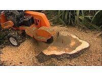 Tree Stump Removal Tree Felling