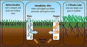 Lawn Aeration in Vaughan Area