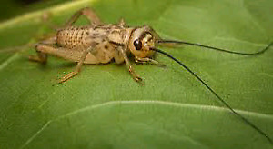 Looking for someone who delivers crickets meal worms & supers