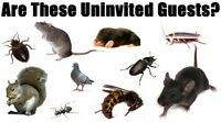 Low Cost Pest Control and Inspection Services