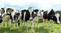 LOOKING FOR A RELIEF MILKER