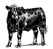 WANTED: Agistment / Lease suitable for Cattle Grazing Stanthorpe Southern Downs Preview