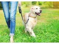 Dog Walker/Cat Sitter/Pop-In Services