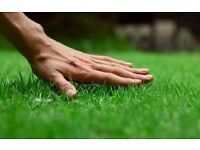 TURF for sale quality lawn turf for collection from £2.95 m2