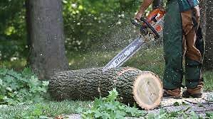 Low Cost Tree Removal and Landscaping