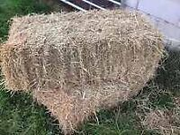 Hay for sale - square bales - decent size